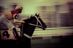 Cove Carralo (psychopenguin) Tags: horse race caballo saopaulo jockey cavalo corrida carrera