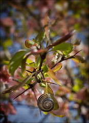 Snail (Rez J) Tags: park pink summer toronto ontario flower nature 50mm zoo dof bokeh sony snail alpha 18 torontozoo a77 interestin sonya77
