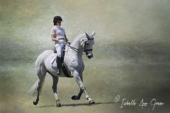 GMHA June 2012 Dressage (Isabelle Ann) Tags: horse art caballo cheval vermont pferde cavallo cavalo pferd equus dressage equineart gmha thelittledoglaughed isabelleann isabelleanngreen isabellegreen paaard junedressage