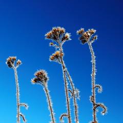 (Käpylä) Tags: flowers blue winter sky white snow ice canon suomi finland frozen january lumi talvi 1740 järvenpää tuusulanjärvi tammikuu jää 500d taivas canon1740f4lusmgroup