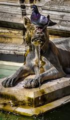 Pel naso (Likantrupus) Tags: urban italy water di siena toscana gaia acqua turismo fontana fontaine architettura