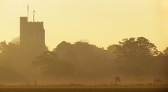 Church of St Mary (Rob Felton) Tags: mist tree church fog bedford dawn bedfordshire felton stmarys churchofstmary lumen cardington robertfelton