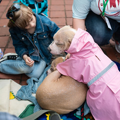 Sonja and Johnny (Knight725) Tags: dog pennslanding d800 adoptionevent sigma35mmf14
