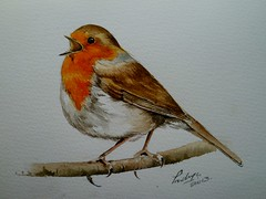 P1040440 (rosez325) Tags: bird art robin birds illustration watercolor painting singing drawing wildlife watercolour