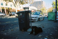 A919043-R1-10-26A (James McKeon) Tags: autumn dog film 35mm volkswagen graffiti nikon fujifilm canberra bordercollie gti mk5
