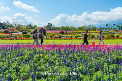 Harry_10006,,,,,,,,,,,,,,,,,, (HarryTaiwan) Tags: taiwan     d800                  harryhuang    hgf78354ms35hinetnet