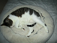 now this is sleeping (Robert S. Photography) Tags: sleeping cats pets comfortable bed tail canonpowershot