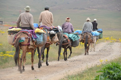Mule trekking in the Atlas Moutains, Morocco