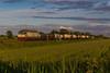 1016 - 652_159 + CISTERNE a MIGLIARINO 20-5-2013 (SCARLINO - RHO) FULL HD (Frank Andiver TRAIN IN TUSCANY) Tags: italy train canon frank photo italia photos rail trains tuscany rails locomotive toscana treno tigre fs trenitalia treni ferrovie binario 652 e652 fullhd andiver frankandiver trainintuscany