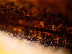 Backpacking the Americas (California, USA) (Emece Taylor) Tags: california de lens four angle voigtlander wide panasonic micro tres gran angular ultra camara thirds 25mm beekeeping wwoof cuartos gh3