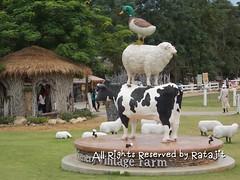 ฟาร์มแกะ Scenery Vin tage Farm @ Rachabur i, Thailand