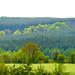 46-Dave Vincent - Landscape