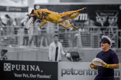 Amazing High Flying Dog