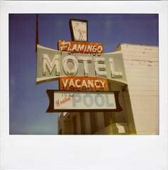 Flamingo Motel (Nick Leonard) Tags: old pink red cute classic film pool vintage polaroid neon teal flamingo nevada nick motel roadtrip scan retro neonsign polaroidspectra reno vacancy timeless heated motelsign expiredfilm instantfilm flamingomotel polaroidspectrafilm polaroidfilm polaroidspectrasystem integralfilm nickleonard type1200 expired2008 believeinfilm