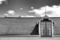 vane (lynn.h.armstrong) Tags: camera roof light sea sky bw seagulls white ontario canada black building art window monochrome weather birds wheel wall museum clouds dark lens photography photo aperture nikon long flickr cornwall photographer shadows wordpress gulls south panes wb blogger images lynn livejournal h spinning getty curtains nik van ornate nikkor vane armstrong stormont facebook sault ingleside twitter tumblr d7000 lynnharmstrong pinterest