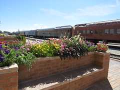 Sweet Spot to Wait for a Train (Patricia Henschen) Tags: bench colorado sanluisvalley pullman depot railcars railroadstation drg passengercar slrg alamosacolorado railroadequipment riograndescenicrailway riograndscenicrailroad