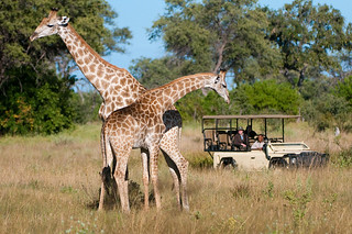 Botswana Okavango Delta Photo Safari 4