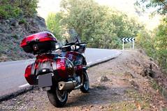 Honda Deauville (DOCESMAN) Tags: bike honda moto motorcycle motor deauville motorrad motorcykel moottoripyörä motocykel motorkerékpár nt700v ntv700 docesman mototsikl danidoces