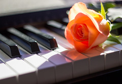 Romance with a piano