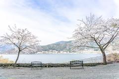 Cherry Blossom (IQRemix) Tags: travel japan canon  kanagawa hakone  2015 komagatake lakeashi hakoneropeway  mounthakonekomagatake