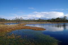 Viru raba (Jaan Keinaste) Tags: nature spring estonia pentax bog eesti loodus k3 kevad raba viruraba matkarada laugas pentaxk3