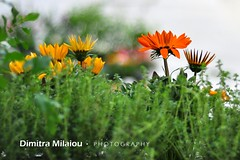 Have a nice day... (dimitra_milaiou) Tags: world life flowers light wild summer orange plant colour green love nature colors beautiful smile yellow island happy photography daylight spring nice fantastic nikon europe moments day bokeh earth live grow happiness greece planet lovely andros cyclades dimitra 2015 d90 ελλαδα φωτογραφια δήμητρα δημητρα milaiou μηλαιου μηλαίου