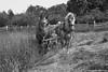 Horses at work -3 (digithief) Tags: horse ontario canada farm belgian milton plough clydesdale workhorse countryheritage percheron