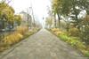 Avenue Victor Hugo (Clém VDB (TIOGRIS)) Tags: point de fuite vanishingpoint street rue city rodez tiogris