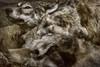 Wolves (pni) Tags: wolf taxidermy multiexposure multipleexposure tripleexposure museum thefinnishmuseumofnaturalhistory luonnontieteellinenkeskusmuseo museo naturhistoriskacentralmuseet luomus helsinki helsingfors finland suomi pekkanikrus skrubu pni animal diorama