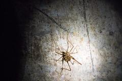 1608 SE Asia (208) (ChrisJS2) Tags: kualalumpur batubatu darkcave