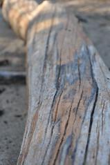 driftwood (daeghraefn) Tags: caesarcreekstatepark log driftwood