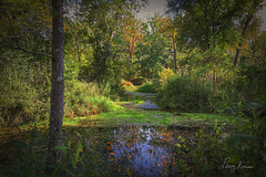 Early Fall at Montauk State Park (LarryHB) Tags: 2014 autumn forest hdr horizontal landscape midwest missouri missouristateparks nationalpark ozarknatinalscenicriverways reflection river rural scenic larrybraunphotography