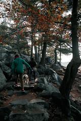 7Q7A6100 (armincreates) Tags: nature fall colors trees lake mountains hike dog puppy beauty trail panorama sunset cows farm wisconsin illinois usa walk
