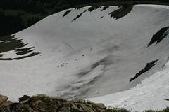 Willmore Wilderness Park (Alberta Parks) Tags: caribou herd hoofed mammal rangifertarandus wildlife animal alberta northern rockies mountain wilderness willmore canada ungulate alpine