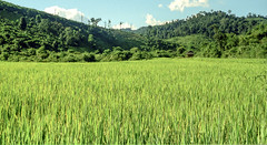Landscape : Nam Tha #3 (foto_morgana) Tags: analogphotography analogefotografie asia indochina landscape laos nikoncoolscan outdoor panoramic photographieanalogue ricefield scenic travelexperience vuescan