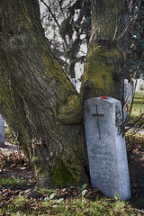 Lean on Me (Solojoe) Tags: november112016 november11 remember remembranceday saintjoachimcemetery edmonton alberta graveyard millitary wwi wwii dead tree leanonme billwithers song poetry 7002000mmf28