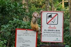 DSC01655_2 (Chris wwh) Tags:  reservoir hk  hongkong monkey