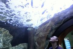 IMG_5663 (godpasta) Tags: newportaquarium kentucky newport aquarium