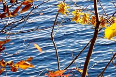 Herbstwanderung am Rursee (hubert_hamacher) Tags: rur rursee wanderung wasser laub bume sonne bunt