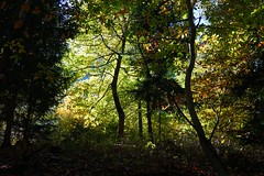 Tils (inge.sader) Tags: sdtirol trentino altoadige adige eisacktal brixen bressanone tils feichter landschaft landscape natur autunno herbst forrest trees bume