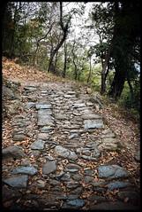 Sacra di San Michele - Antica mulattiera (claudiobertolesi) Tags: mulattiera sentiero montagna passeggiata pietre boschi