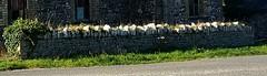 hitting the wall (jofolo) Tags: photostream wah hereois werehere wall stone cornwall