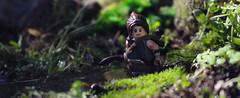 Lara Croft (Kyle Hardisty) Tags: kyle hardisty flickr photography 2016 lego macro microscale minifig fig minifigure moc creation depth field canon outside outdoors tomb raider lara croft definitive edition xbox one ps4 irl fire outdoor