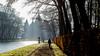 morning walk (soundmoods) Tags: castle netherlands winter lane sun beams tree morning cold de haar utrecht haarzuilen light