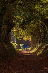 Autumn (Tractorboy1981) Tags: autumn fall leaves couple walk golden brown halnaker tree tunnel sussex uk england shade landscape d7100