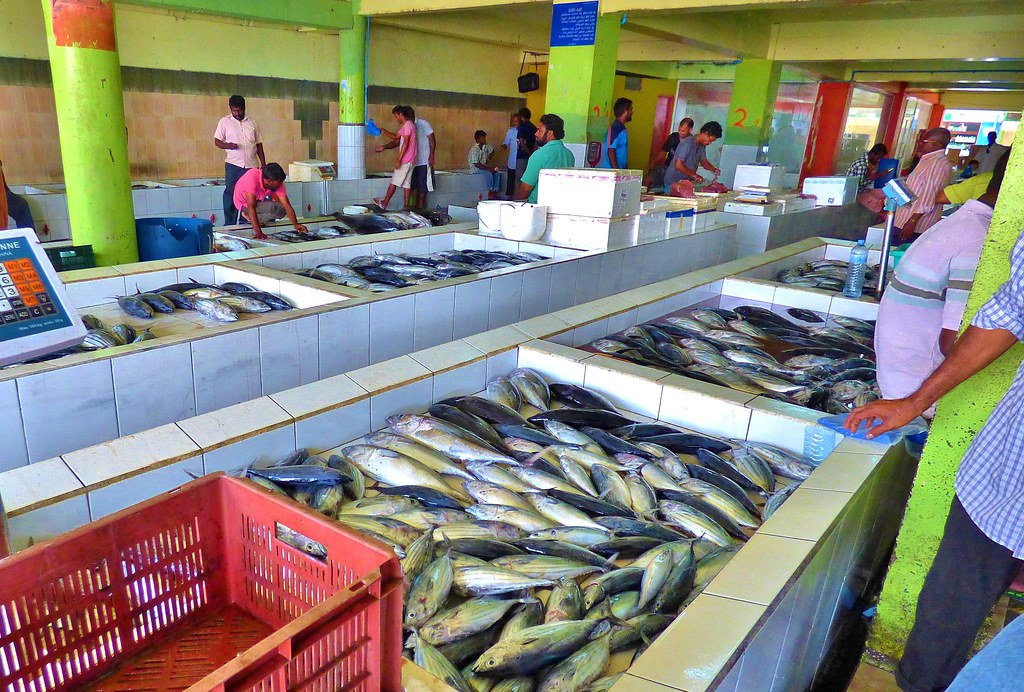 The world 39 s best photos of fish and mauritius flickr for Sea world fish market