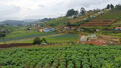 Roadside View (code_martial) Tags: d3300 1685mmf3556gvr ooty2016 coonoor shotbynazia