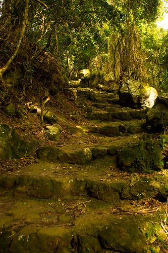 nov 16 009 steps