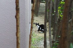Today's Cat@2016-11-10 (masatsu) Tags: cat thebiggestgroupwithonlycats catspotting pentax mx1