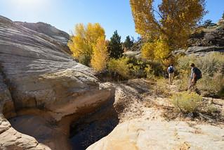Autumn in the slickrock